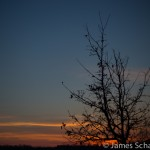 Tree with background sunset